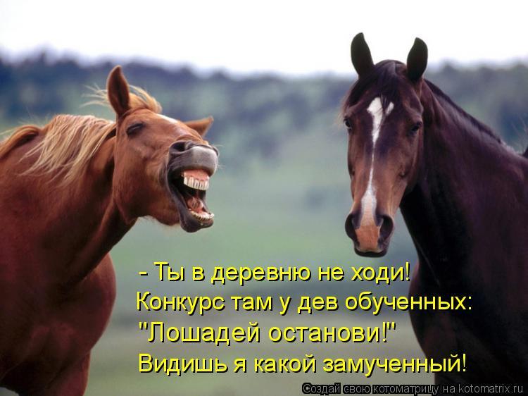 """Котоматрица: - Ты в деревню не ходи! Конкурс там у дев обученных: """"Лошадей останови!"""" Видишь я какой замученный!"""