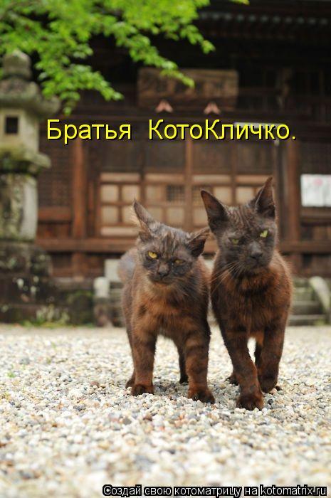 Котоматрица: Братья  КотоКличко.