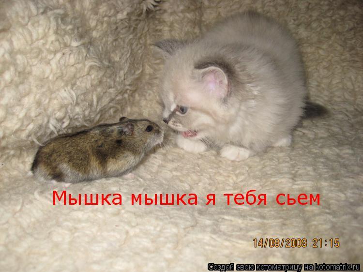 Котоматрица: Мышка мышка я тебя сьем