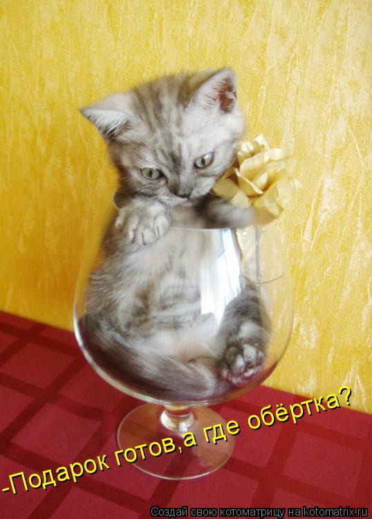Котоматрица: -Подарок готов,а где обёртка?