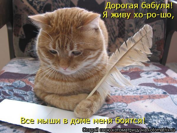 Котоматрица: Дорогая бабуля! Я живу хо-ро-шо, Все мыши в доме меня боятся!