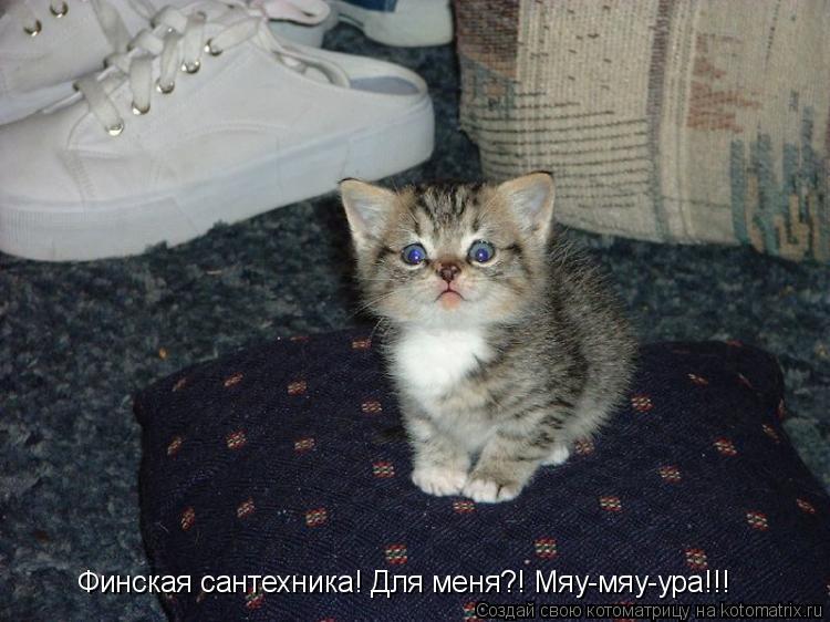 Котоматрица: Финская сантехника! Для меня?! Мяу-мяу-ура!!!