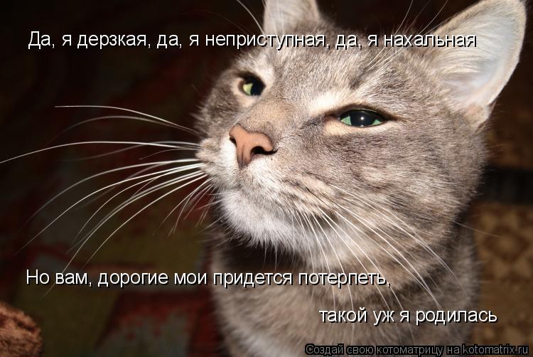 Котоматрица: Да, я дерзкая, да, я неприступная, да, я нахальная  Но вам, дорогие мои придется потерпеть,  такой уж я родилась