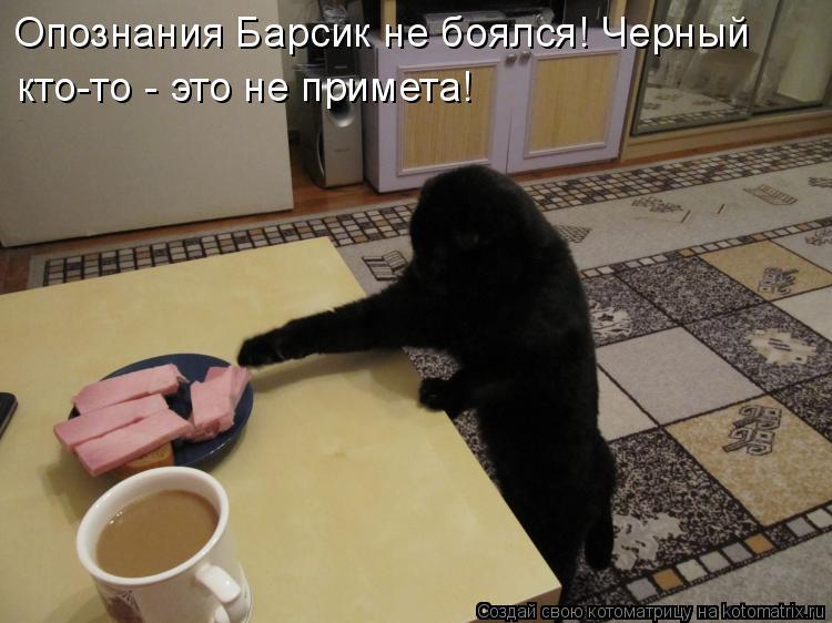 Котоматрица - Опознания Барсик не боялся! Черный кто-то - это не примета!