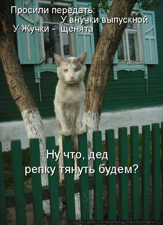 Котоматрица: Просили передать: У внучки выпускной У Жучки -  щенята Ну что, дед репку тянуть будем?