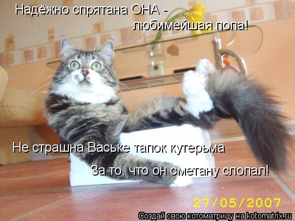 Котоматрица: Надёжно спрятана ОНА - любимейшая попа! Не страшна Ваське тапок кутерьма За то, что он сметану слопал!