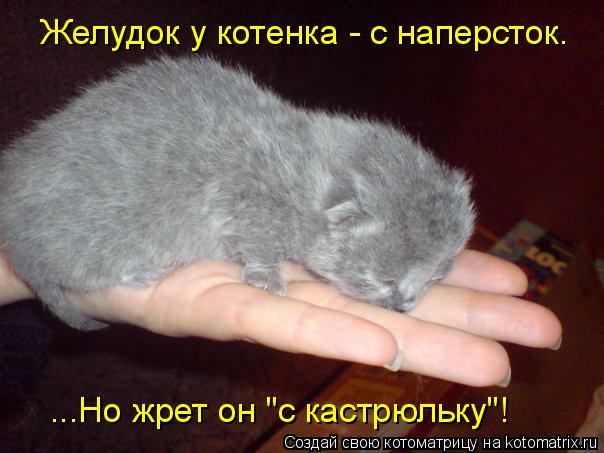 "Котоматрица: Желудок у котенка - с наперсток. ...Но жрет он ""с кастрюльку""!"
