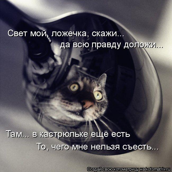 Котоматрица - Свет мой, ложечка, скажи... да всю правду доложи... Там... в кастрюльк