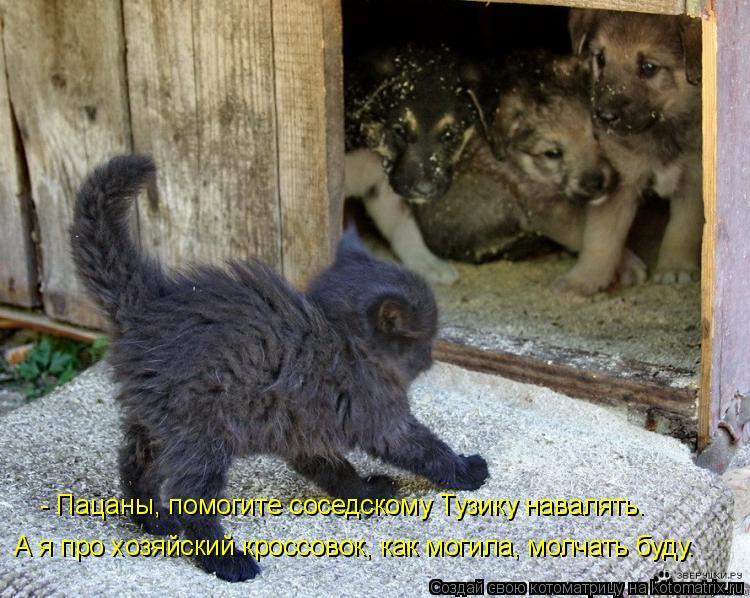 Котоматрица: - Пацаны, помогите соседскому Тузику навалять. А я про хозяйский кроссовок, как могила, молчать буду.