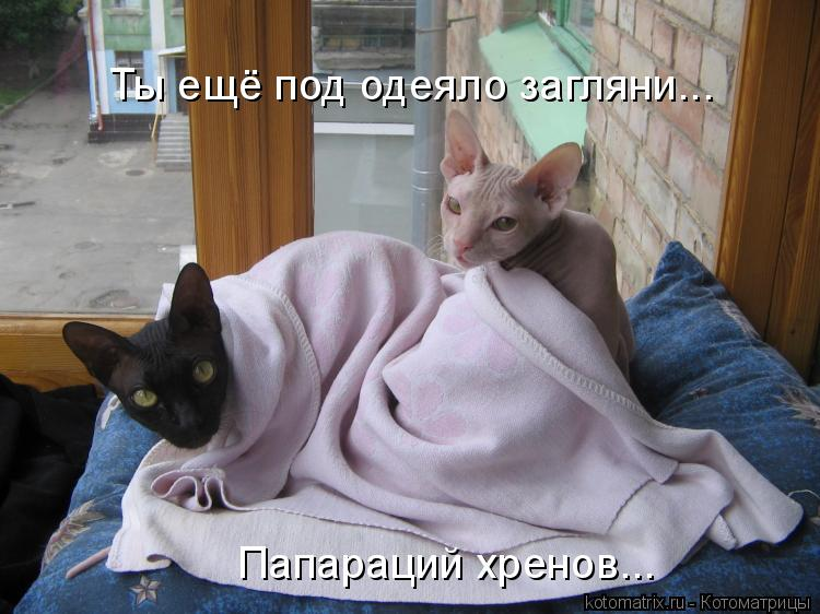 Котоматрица - Ты ещё под одеяло загляни... Папараций хренов...