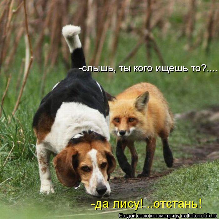 Котоматрица: -слышь, ты кого ищешь то?.... -да лису! ..отстань!