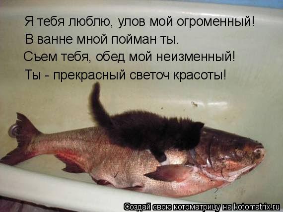 Котоматрица: Я тебя люблю, улов мой огроменный! В ванне мной пойман ты. Съем тебя, обед мой неизменный! Ты - прекрасный светоч красоты!