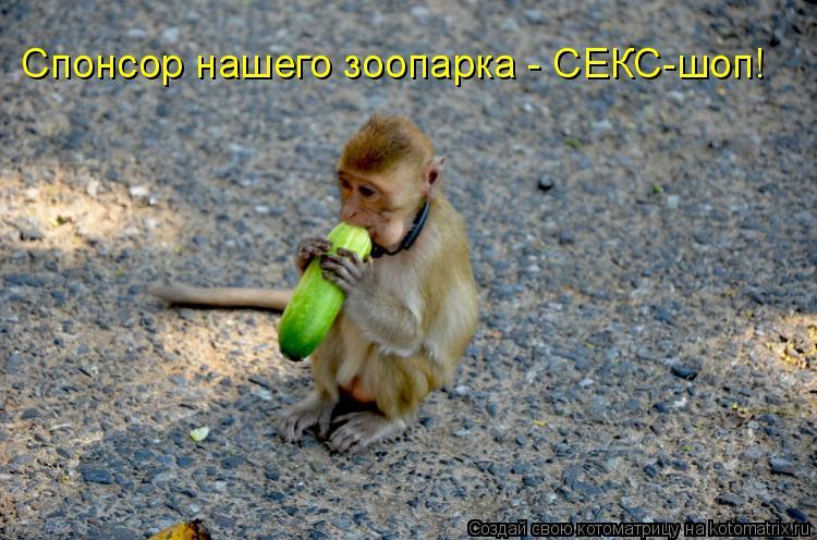 Котоматрица: Спонсор нашего зоопарка - СЕКС-шоп!