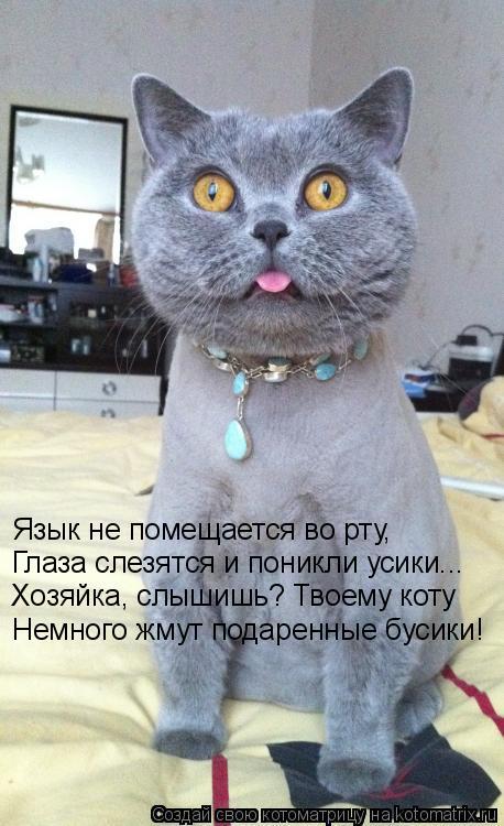 Котоматрица: Немного жмут подаренные бусики! Язык не помещается во рту, Глаза слезятся и поникли усики... Хозяйка, слышишь? Твоему коту