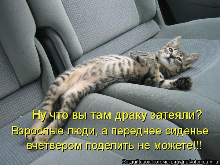 Котоматрица: Ну что вы там драку затеяли? Взрослые люди, а переднее сиденье  вчетвером поделить не можете!!!