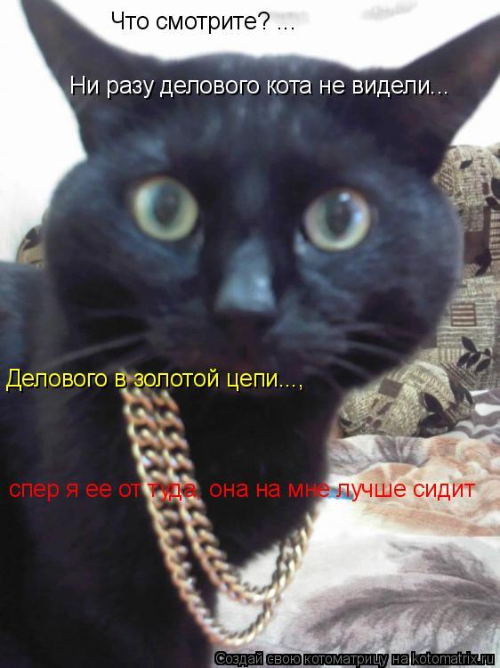 Котоматрица: Что смотрите? ...  Ни разу делового кота не видели... Делового в золотой цепи...,     спер я ее от туда, она на мне лучше сидит