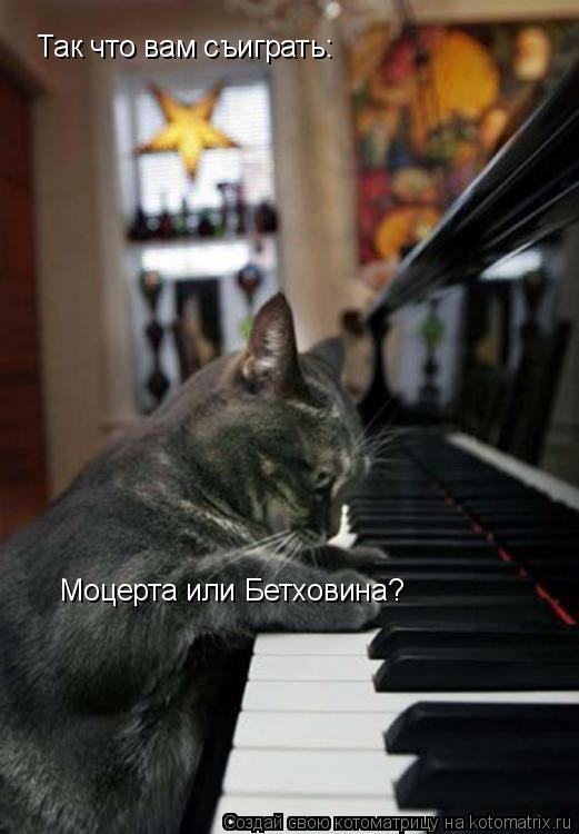Котоматрица: Так что вам съиграть:  Моцерта или Бетховина?