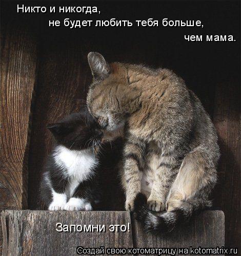 Котоматрица: Никто и никогда, не будет любить тебя больше, чем мама. Запомни это!