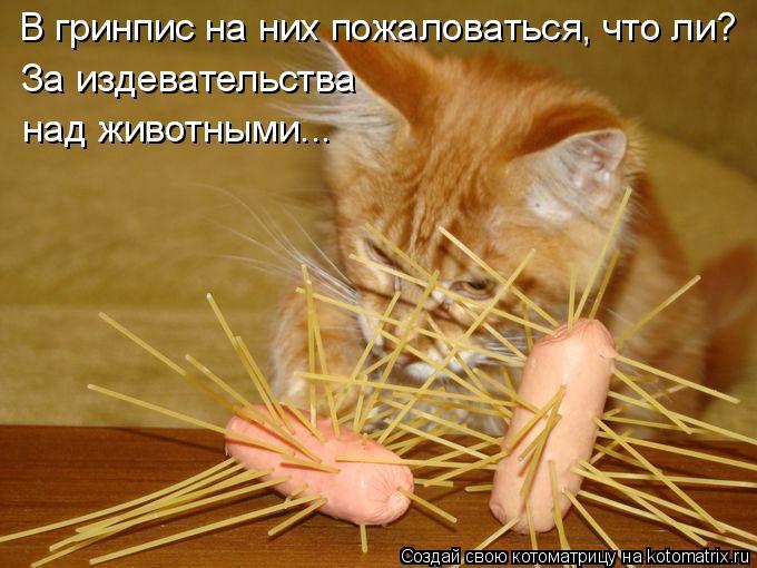 Котоматрица: В гринпис на них пожаловаться, что ли? За издевательства над животными...