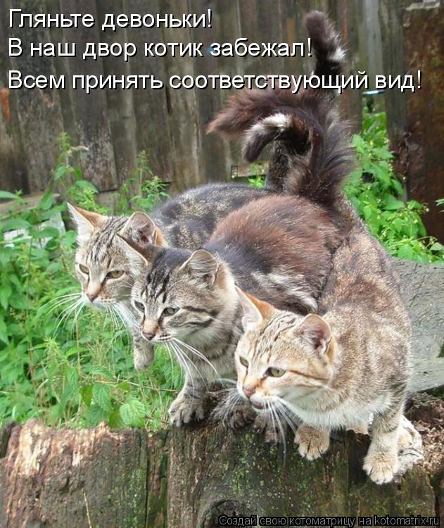 Котоматрица: Гляньте девоньки! В наш двор котик забежал! Всем принять соответствующий вид!