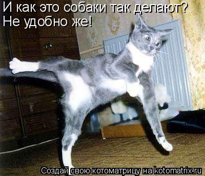 Котоматрица: Не удобно же! И как это собаки так делают?