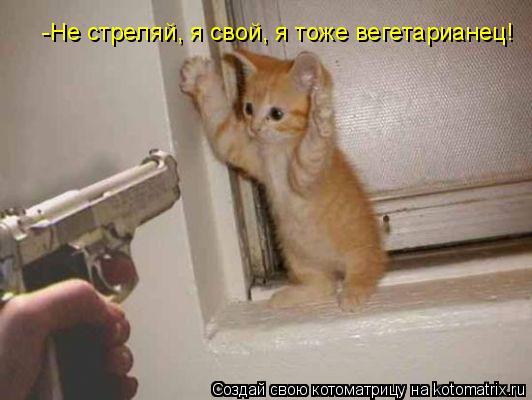 Котоматрица: -Не стреляй, я свой, я тоже вегетарианец!