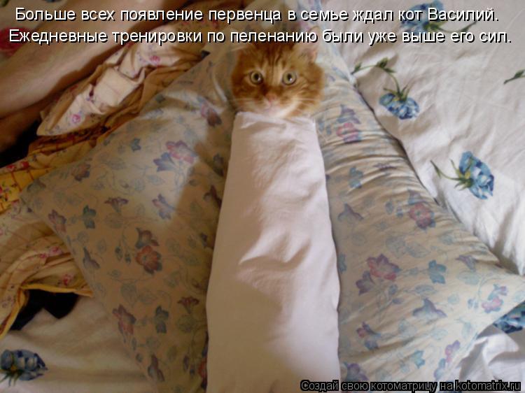 Котоматрица - Больше всех появление первенца в семье ждал кот Василий. Ежедневные тр