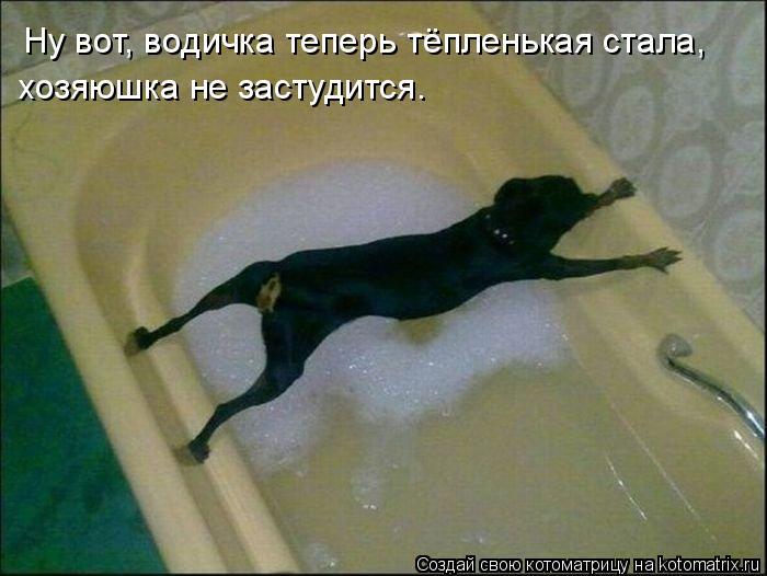 Котоматрица: Ну вот, водичка теперь тёпленькая стала,  хозяюшка не застудится.