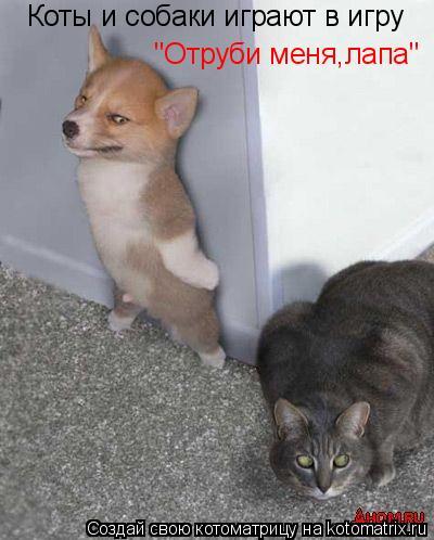 """Котоматрица: Коты и собаки играют в игру """"Отруби меня,лапа"""""""