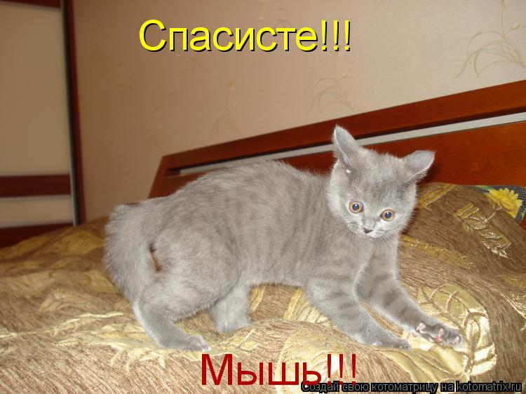 Котоматрица: Спасисте!!! Мышь!!!