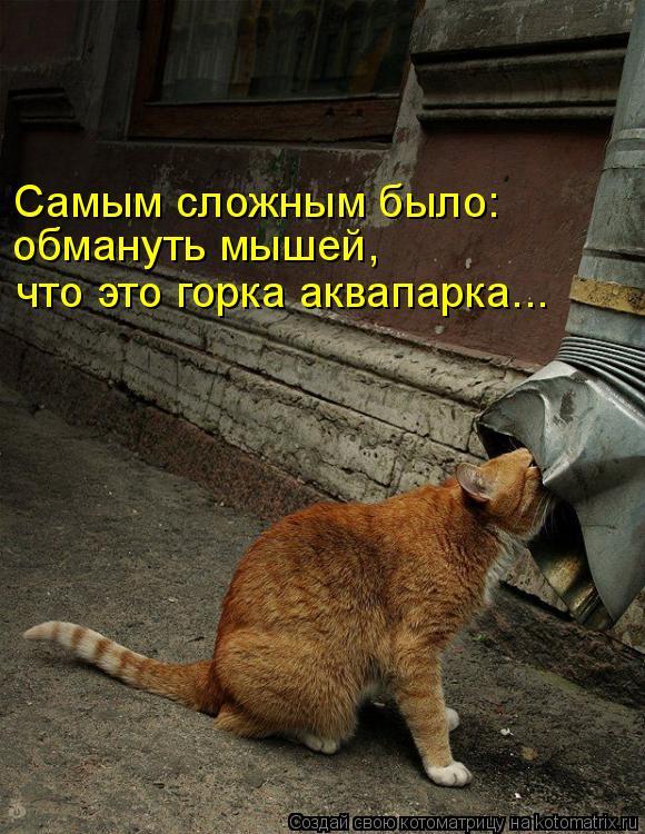 Котоматрица: Самым сложным было:  обмануть мышей, что это горка аквапарка...