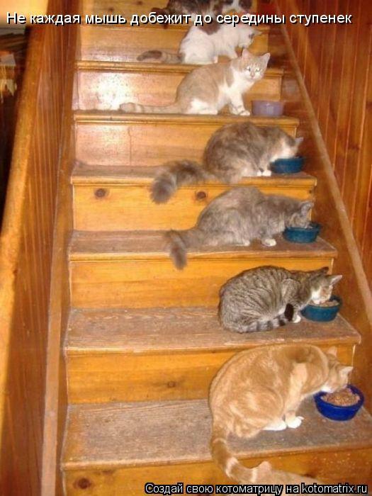 Котоматрица: Не каждая мышь добежит до середины ступенек