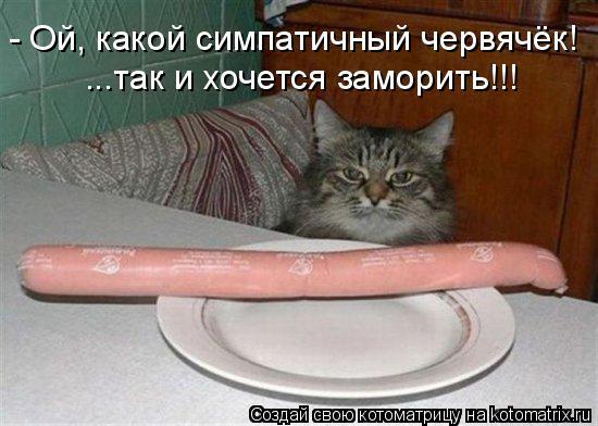 Котоматрица - - Ой, какой симпатичный червячёк! ...так и хочется заморить!!!