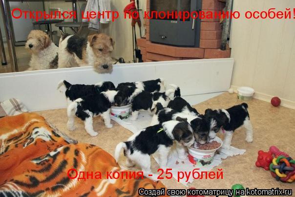 Котоматрица: Открылся центр по клонированию особей! Одна копия - 25 рублей