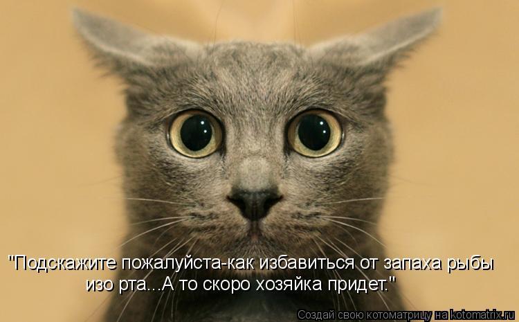 "Котоматрица: ""Подскажите пожалуйста-как избавиться от запаха рыбы изо рта...А то скоро хозяйка придет."""