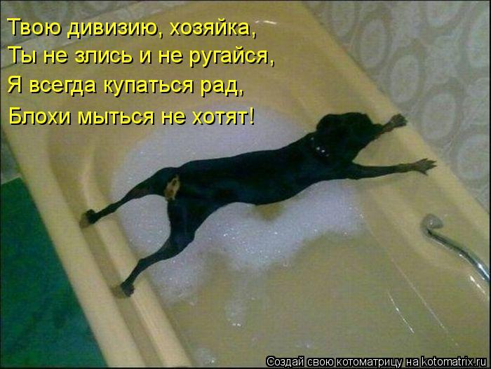 Котоматрица - Твою дивизию, хозяйка, Ты не злись и не ругайся, Я всегда купаться рад