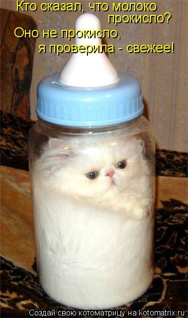 Котоматрица: Кто сказал, что молоко  прокисло? Оно не прокисло,  я проверила - свежее!
