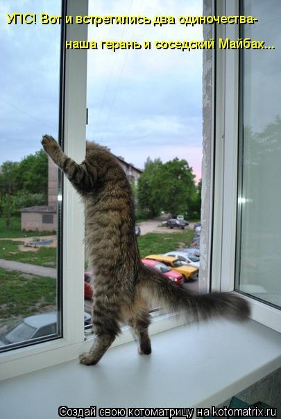 Котоматрица: УПС! Вот и встретились два одиночества-  наша герань и соседский Майбах...