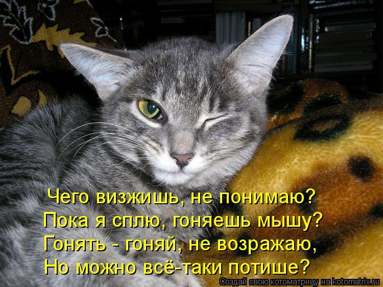 Котоматрица - Чего визжишь, не понимаю? Пока я сплю, гоняешь мышу? Гонять - гоняй, н