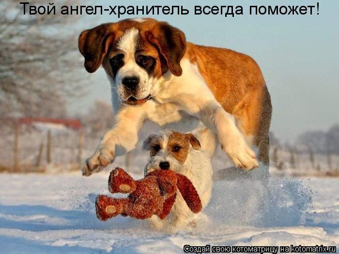 Котоматрица: Твой ангел-хранитель всегда поможет!