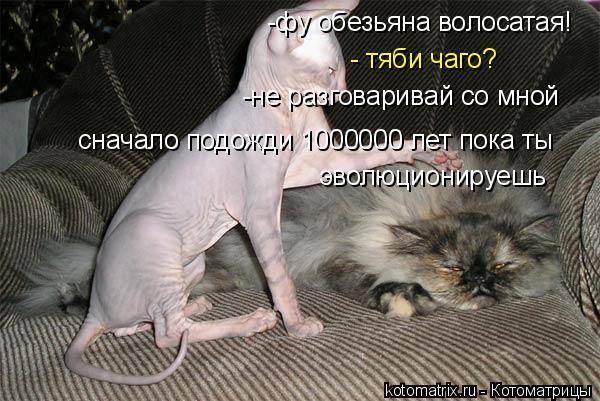 Котоматрица: -фу обезьяна волосатая! - тяби чаго? -не разговаривай со мной  сначало подожди 1000000 лет пока ты эволюционируешь