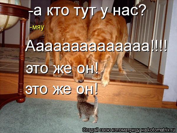 Котоматрица: -а кто тут у нас? -мяу Аааааааааааааа!!!! это же он! это же он!
