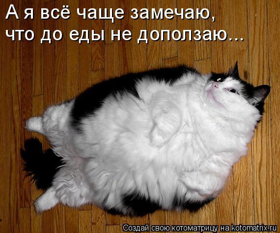 Котоматрица - А я всё чаще замечаю, что до еды не доползаю...