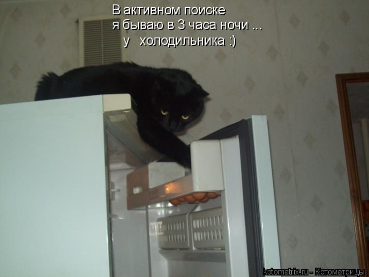 Котоматрица: В активном поиске я бываю в 3 часа ночи ... у   холодильника :)