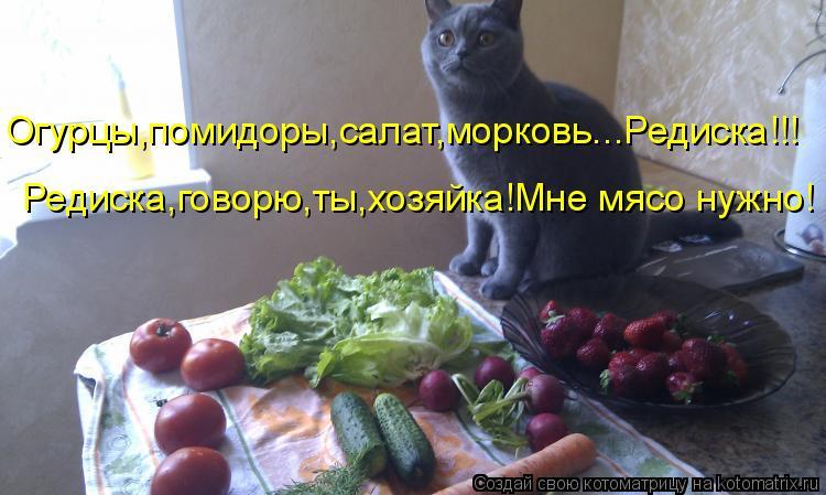 Котоматрица - Огурцы,помидоры,салат,морковь...Редиска!!! Редиска,говорю,ты,хозяйка!М