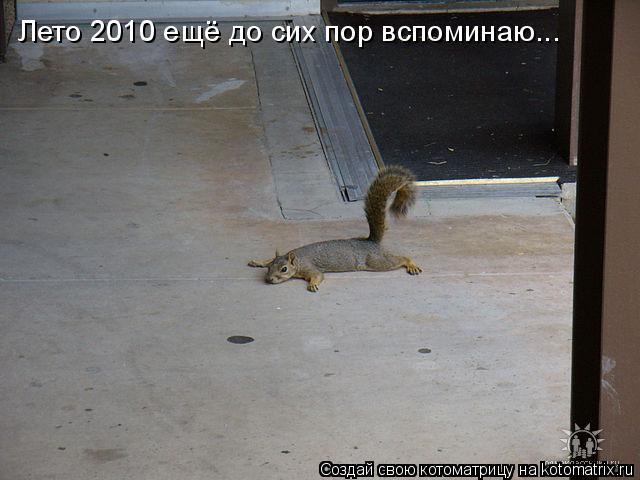 Котоматрица: Лето 2010 ещё до сих пор вспоминаю...