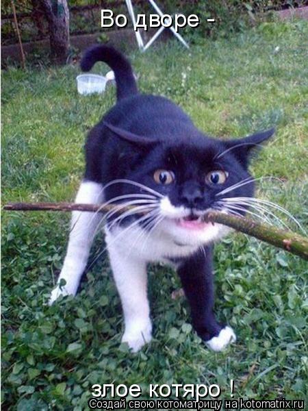 Котоматрица: Во дворе - злое котяро !