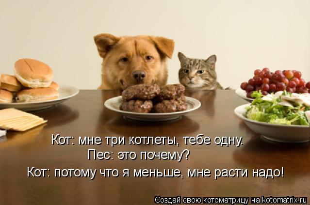 Котоматрица: Кот: мне три котлеты, тебе одну.  Пес: это почему?   Кот: потому что я меньше, мне расти надо!