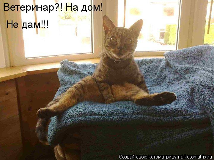 Котоматрица: Ветеринар?! На дом! Не дам!!!