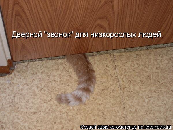 Котоматрица - Дверной